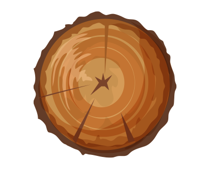 Cross Section of a Log